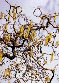 Дерево из бисера плюмерия